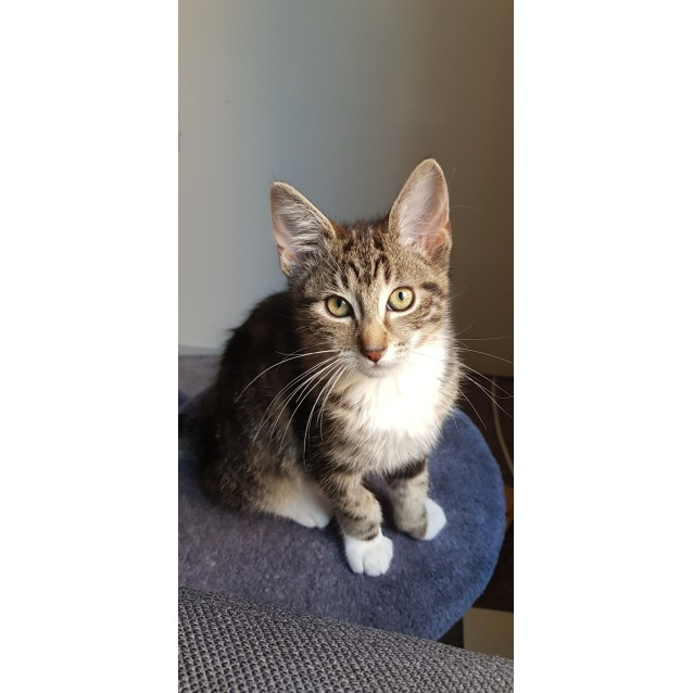 Photo of George (Located In Frankston)