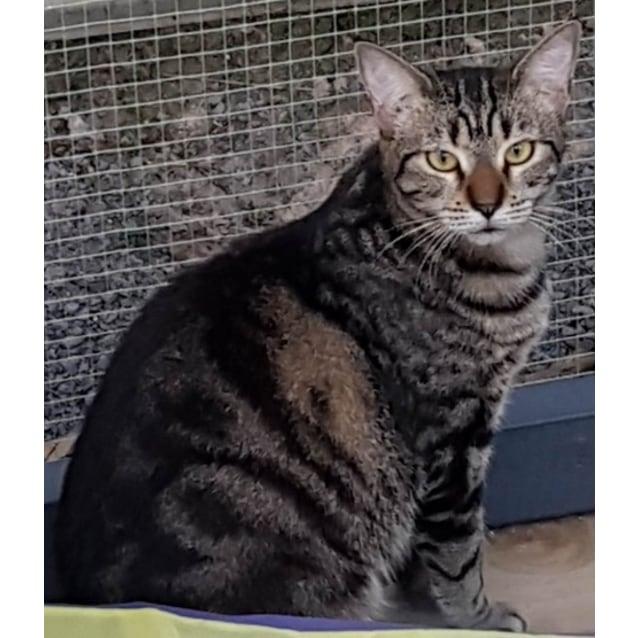 Photo of Tigerlilly
