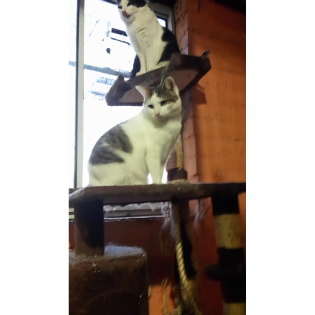 Photo of Kenny   Located In Lower Templestowe