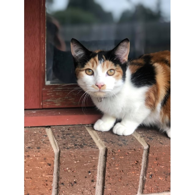 Photo of Penny (Located In Somerville)