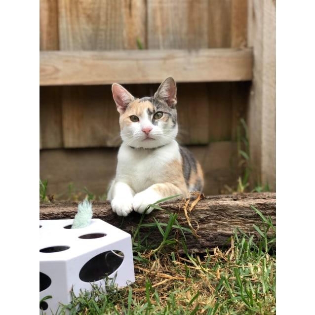 Photo of Nina (Located In Seaford)