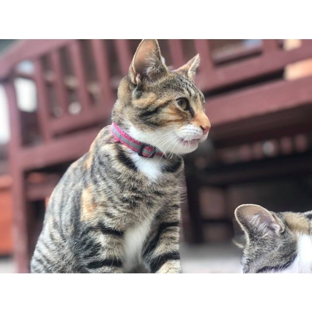 Photo of Tabitha (Located In Somerville)