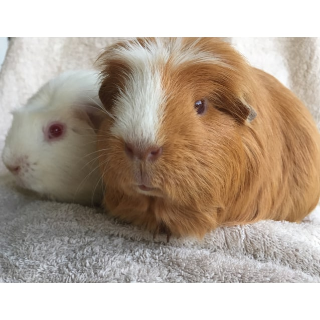 Photo of Sparkles And Ginger