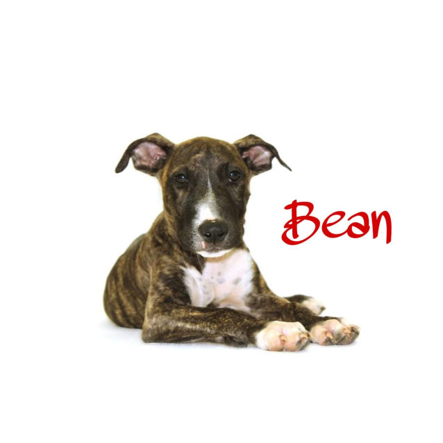 Photo of Bean