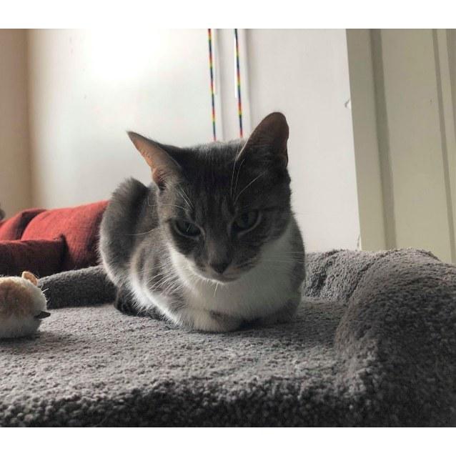 Photo of Geena    Meet Me In Cat Lounge/Neko Hq Preston
