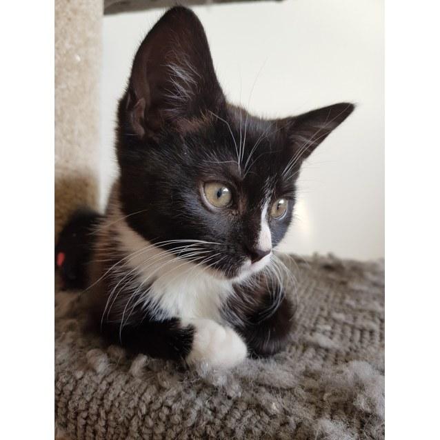 Photo of Hazel (Located In St Kilda)