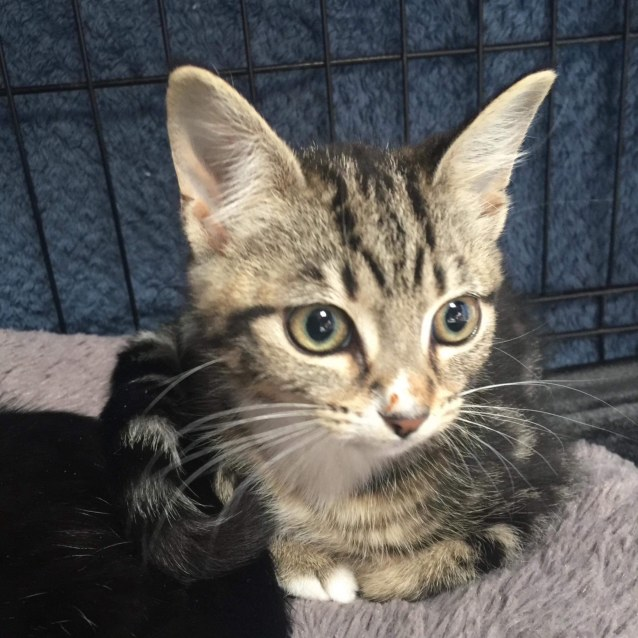Photo of Smudge   Meet Me At Vets On Parker, Templestowe