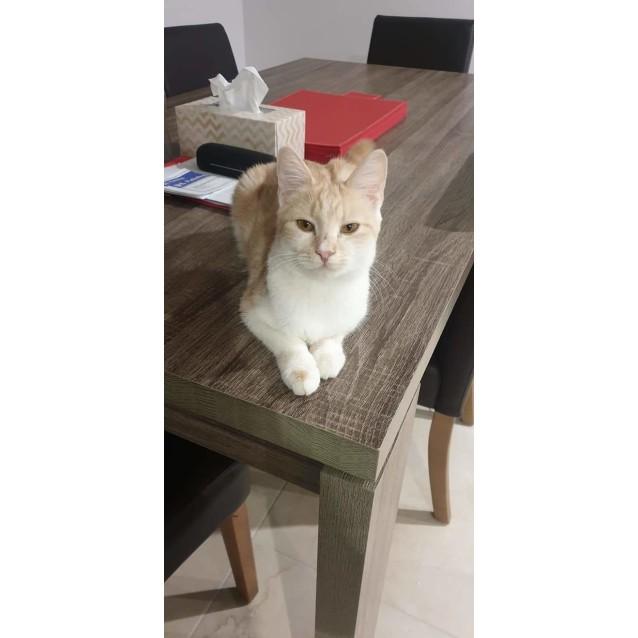 Photo of Poppy