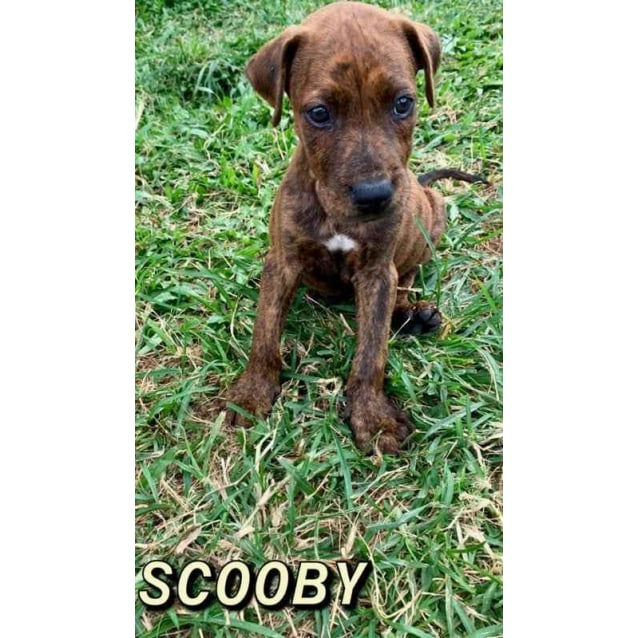 Photo of Scooby