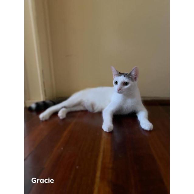 Photo of Gracie (Cat)