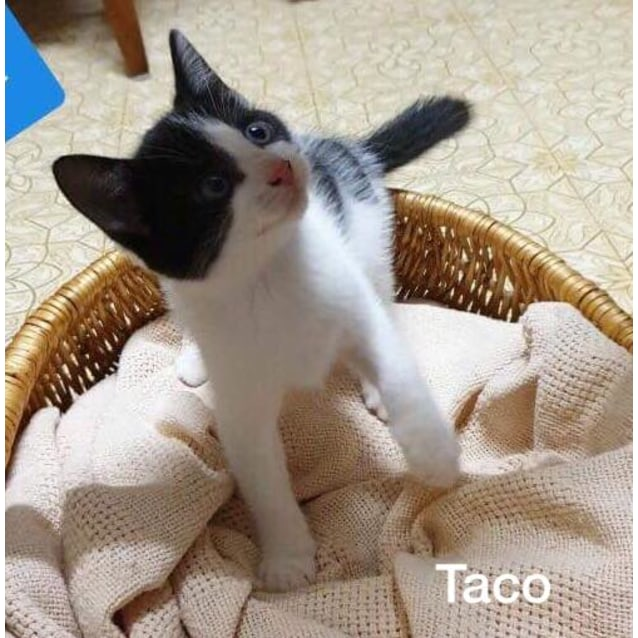 Photo of Taco