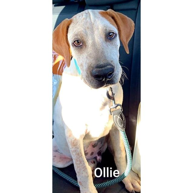 Photo of Ollie