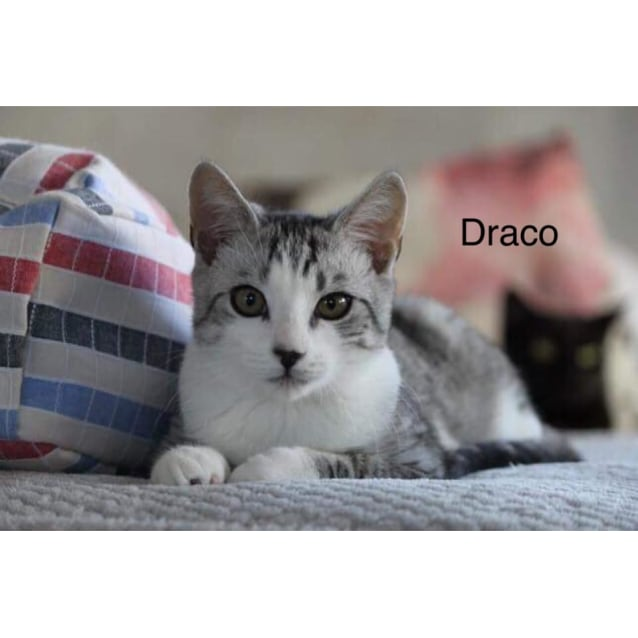 Photo of Draco