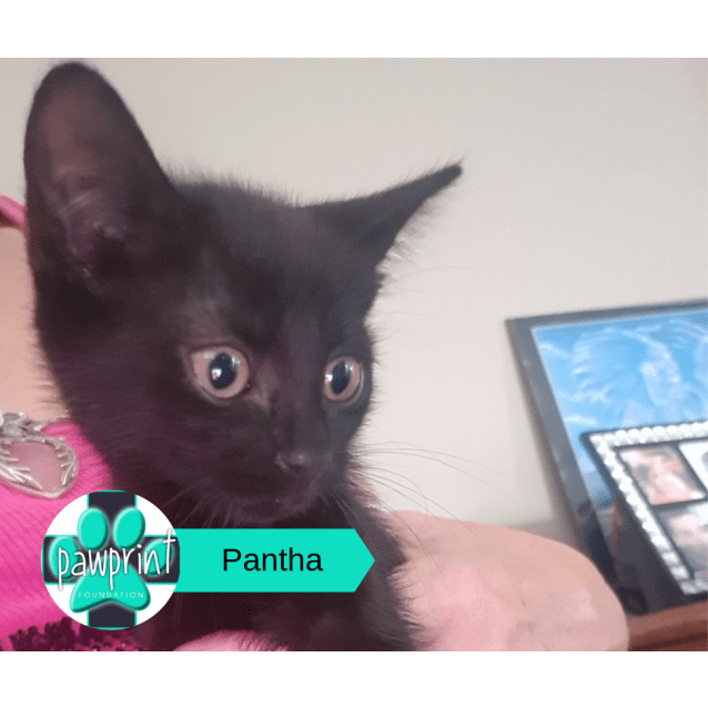 Photo of Pantha