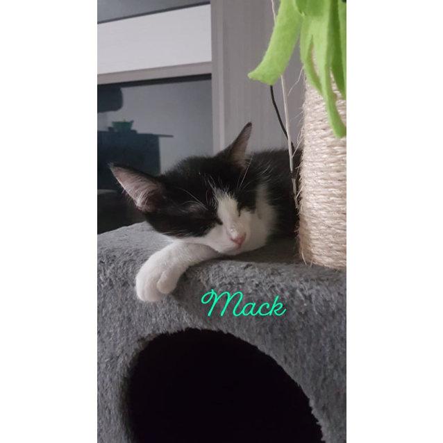 Photo of Mack