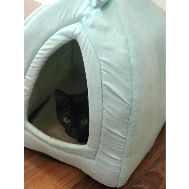 Photo of Pepper    Meet Me In Cat Lounge/Neko Hq Preston