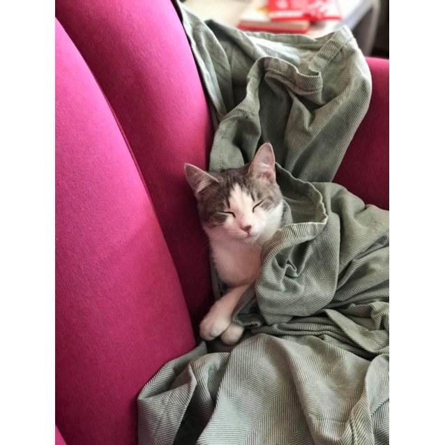 Photo of Britta    Meet Me In Cat Lounge/Neko Hq Preston
