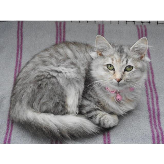 Photo of Miyuki