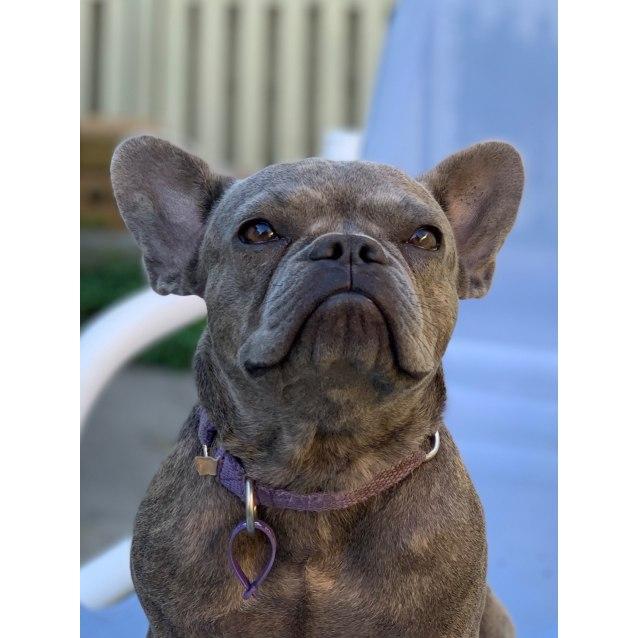 Photo of Isabella