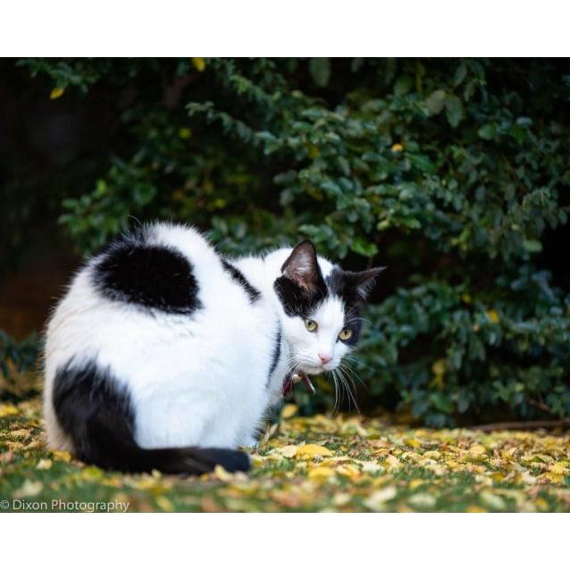 Photo of Moscato