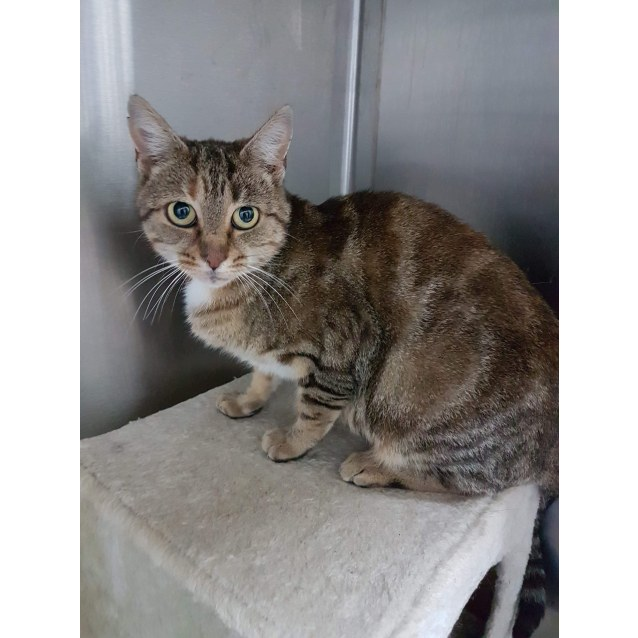 Photo of Shirl    Meet Me At Smythesdale Animal Hospital