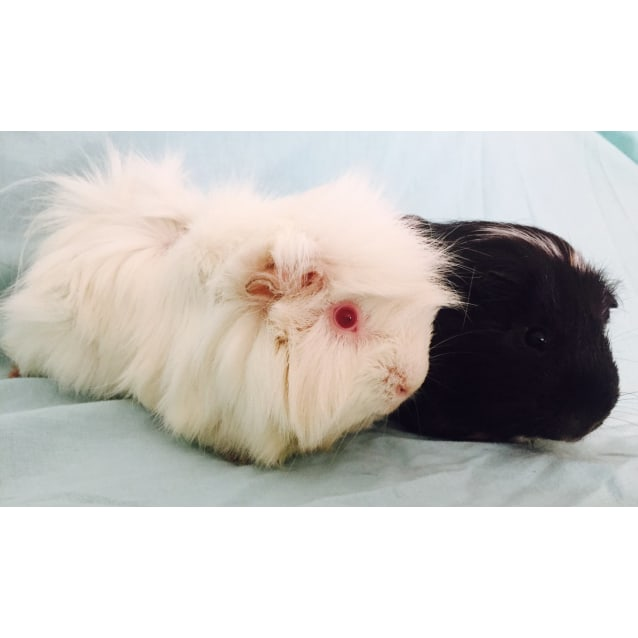 Photo of Fluffbutt And Mickey