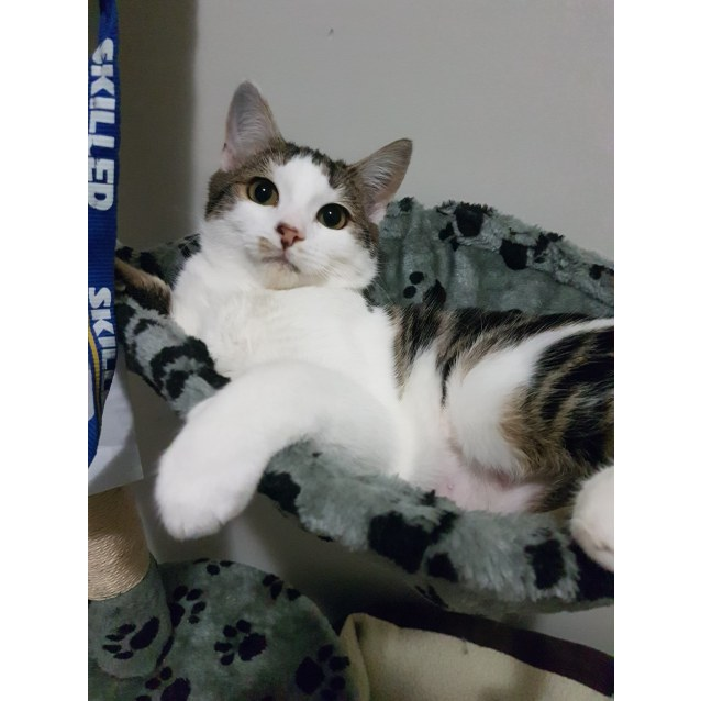 Photo of Delilah   Located In Sunbury
