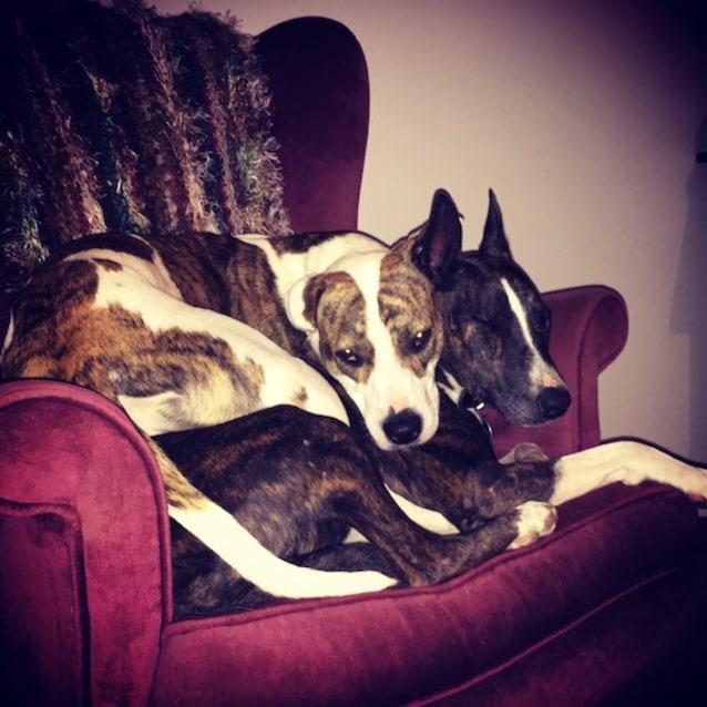 Photo of Jessie (& Bindi)