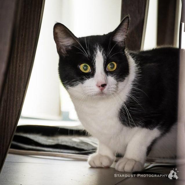 Photo of Ak0878   Oscar (Cora)
