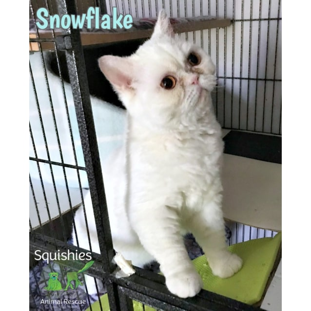 Photo of ❄ Snowflake ❄