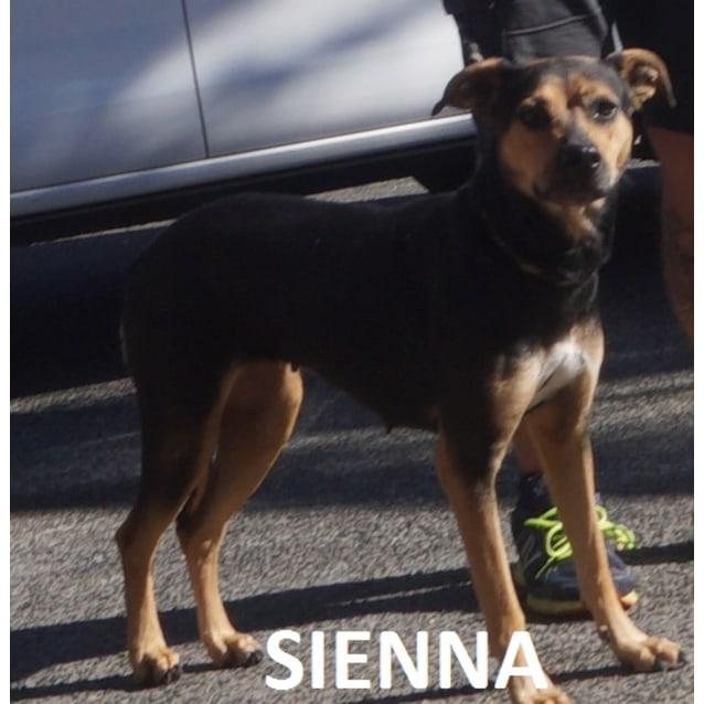 Photo of Sienna