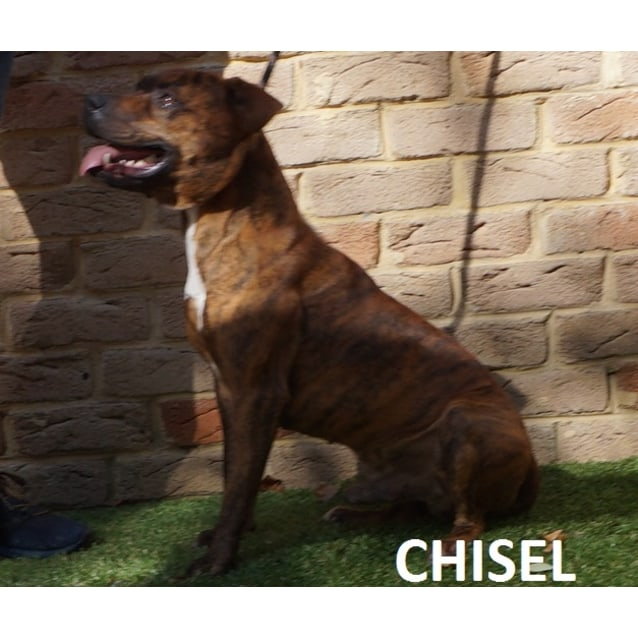 Photo of Chisel