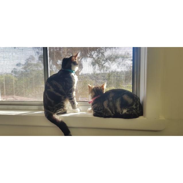 Photo of Jasmine & Aladdin
