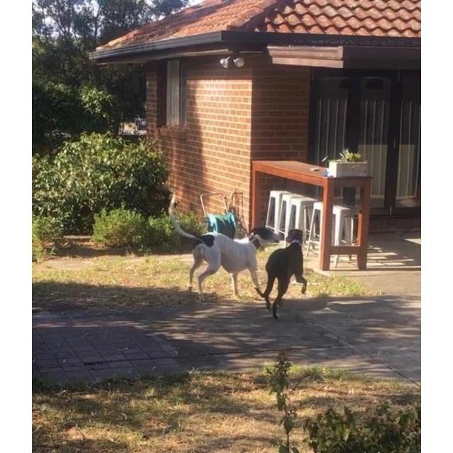 Photo of Minnie.   Melbourne