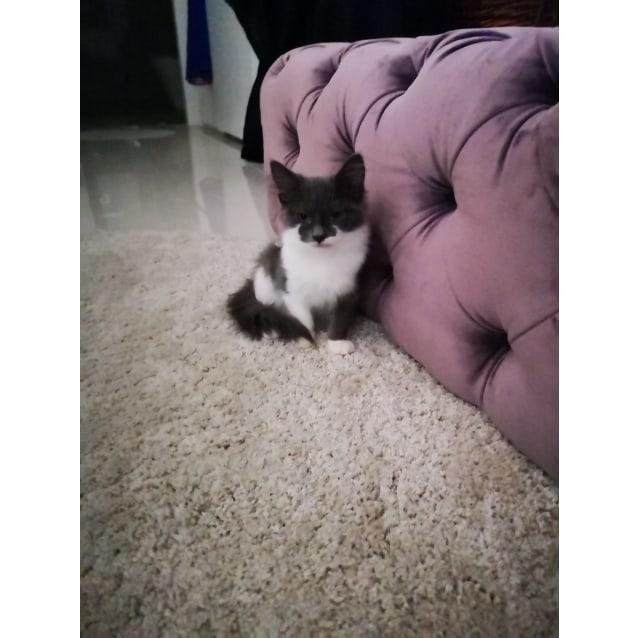 Photo of Rola