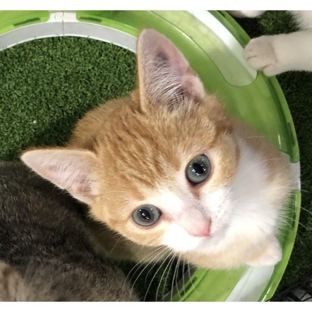 Photo of Tigger   Kitten Cutie