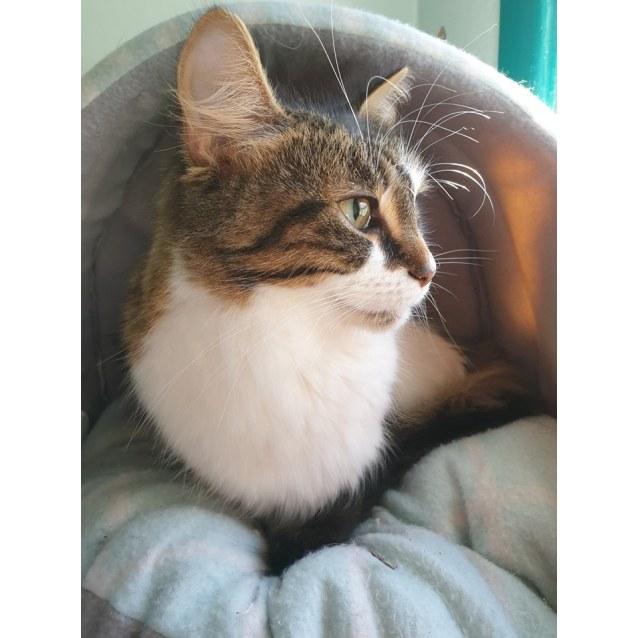 Photo of Gidgie