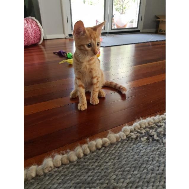 Photo of Hobbes