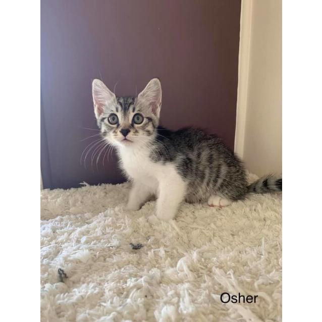 Photo of Osher
