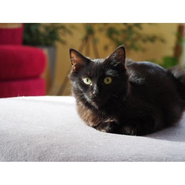 Photo of Morticia