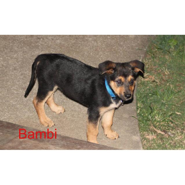 Photo of Bambi