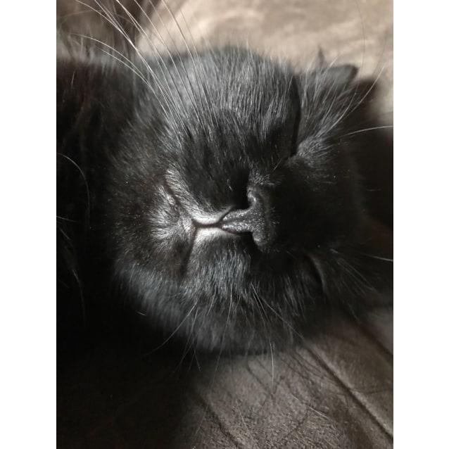 Photo of Kali