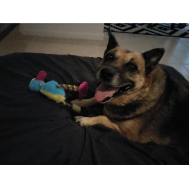 Photo of Tia (Adoption Pending)