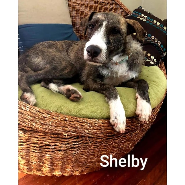 Photo of Shelby