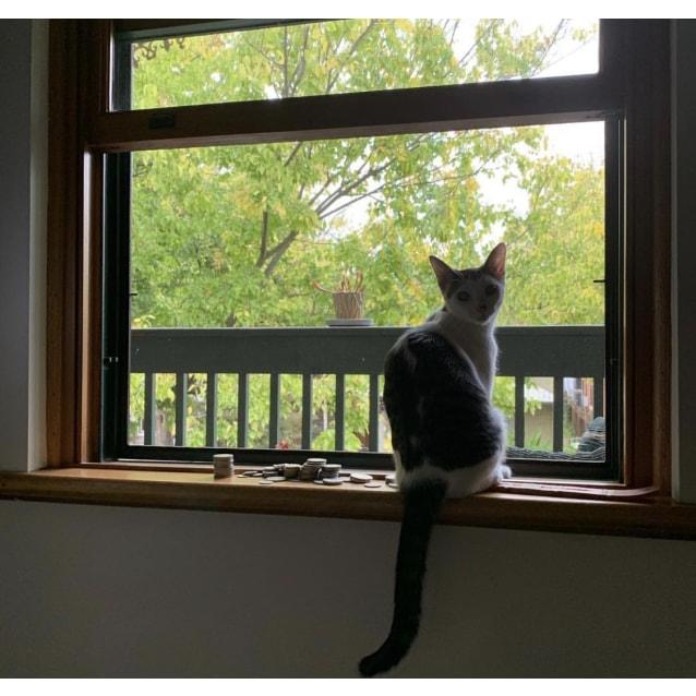 Photo of Cleo 🎀