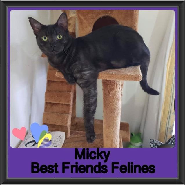 Photo of Micky