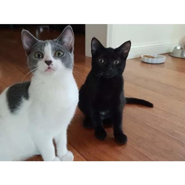 Photo of  Evie And Possum
