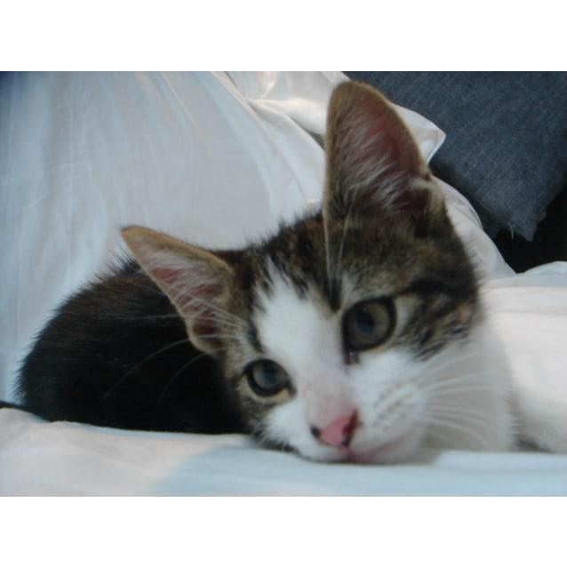 Photo of Hugo
