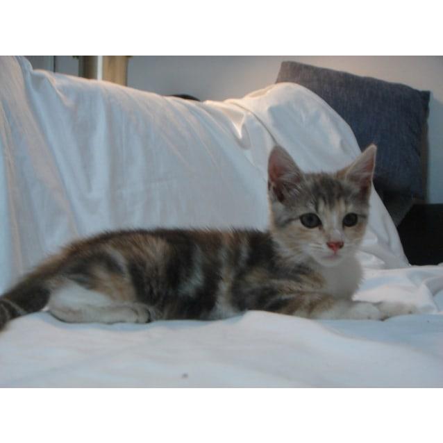 Photo of Lexi