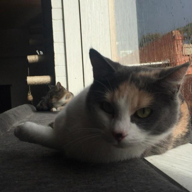 Photo of Rachel    Meet Me In Cat Lounge/Neko Hq Preston